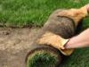 Укладка посевного и рулонного газона